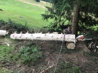 Brunnenholz