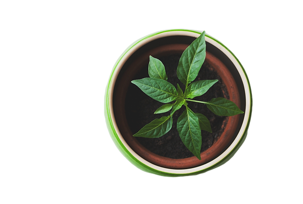Plant%20in%20a%20Pot_edited.png