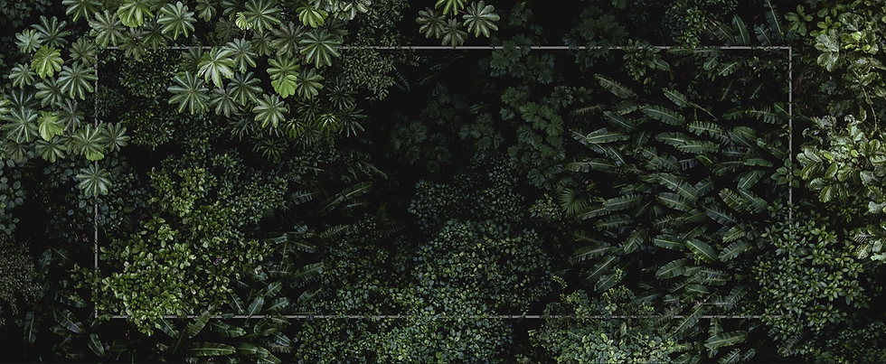 TropicalLeavesBackground.PNG