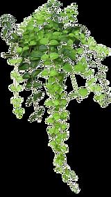 kisspng-flowerpot-houseplant-hanging-bas