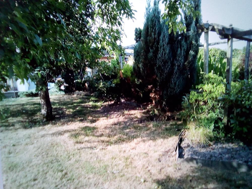 garden ideas, landscaping ideas, over grown garden