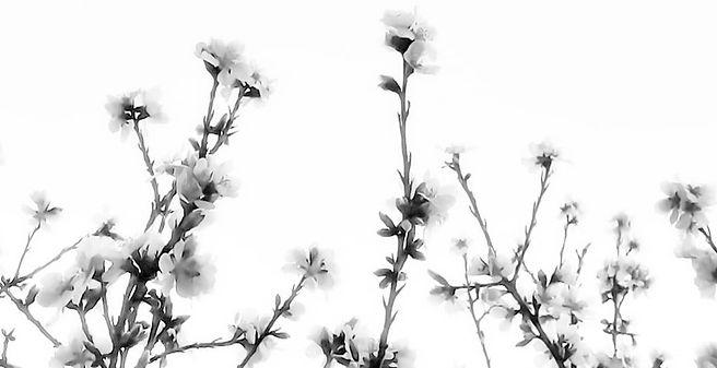 flores_edited.jpg