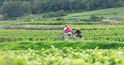 Givry-Photo-Alain-Doire-Bourgogne-Touris
