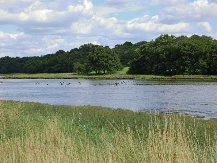 Birds_flying_over_River_Hamble_(94237247
