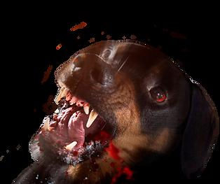 собака.png
