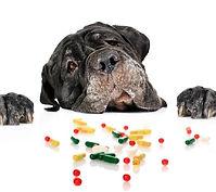 farmacia animal