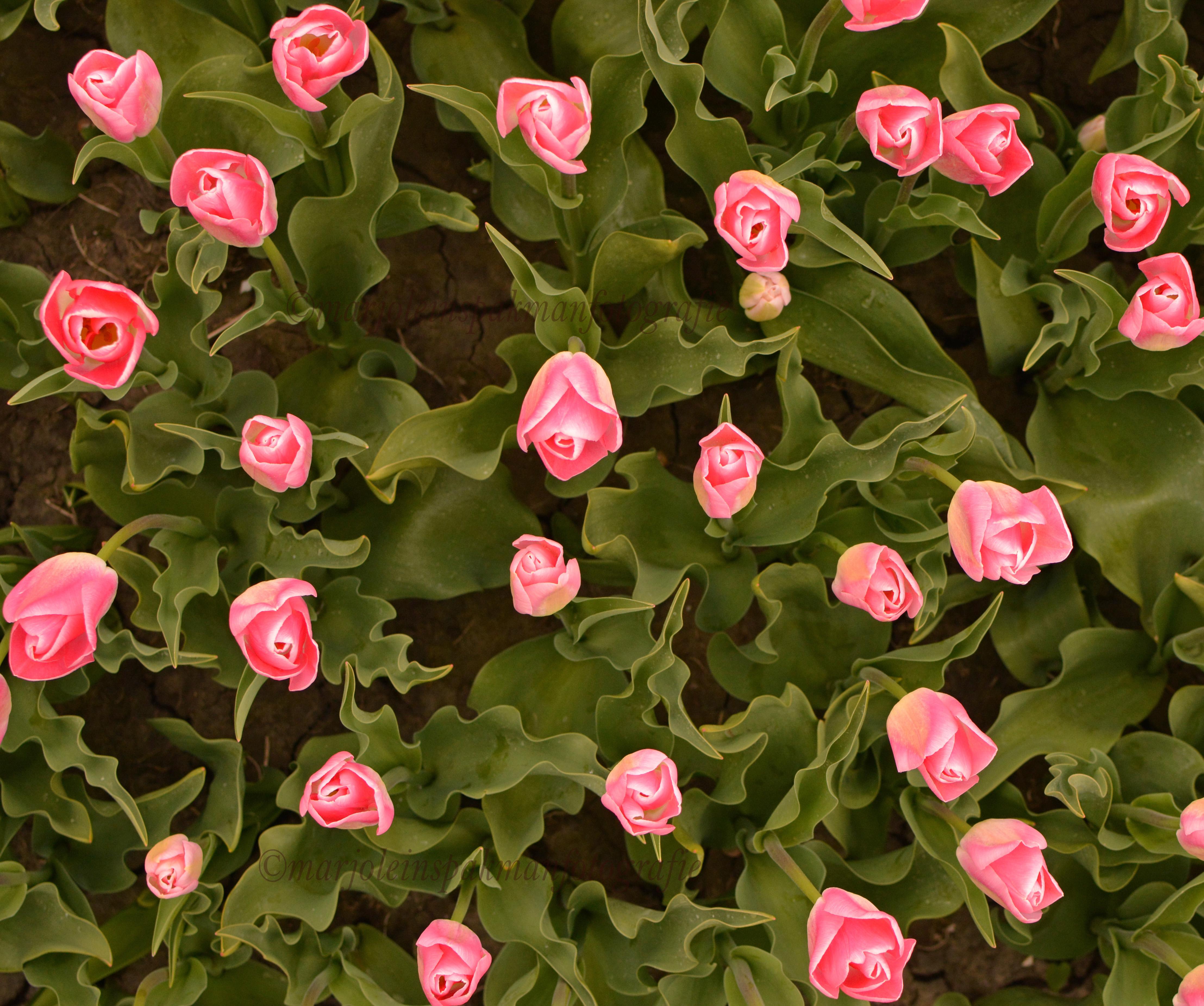 bloemen12