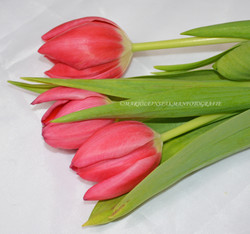 bloemen03