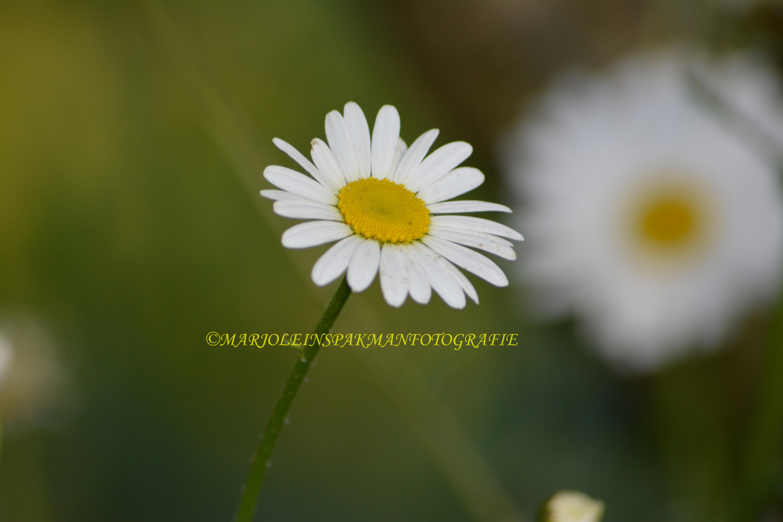 bloemen08