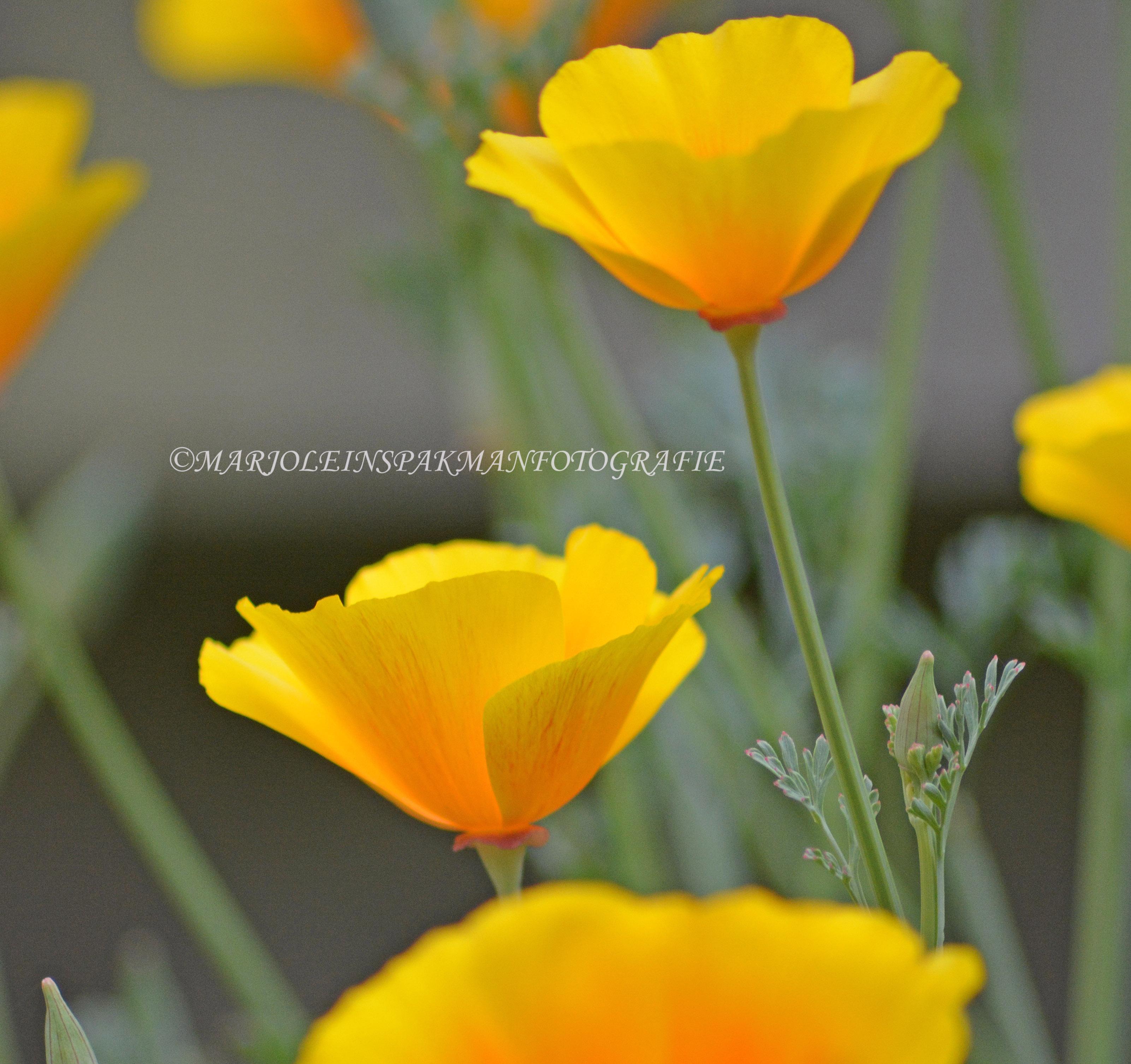 bloemen06