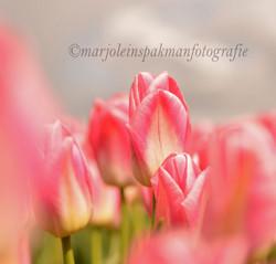 bloemen15