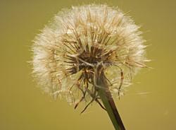 bloemen04