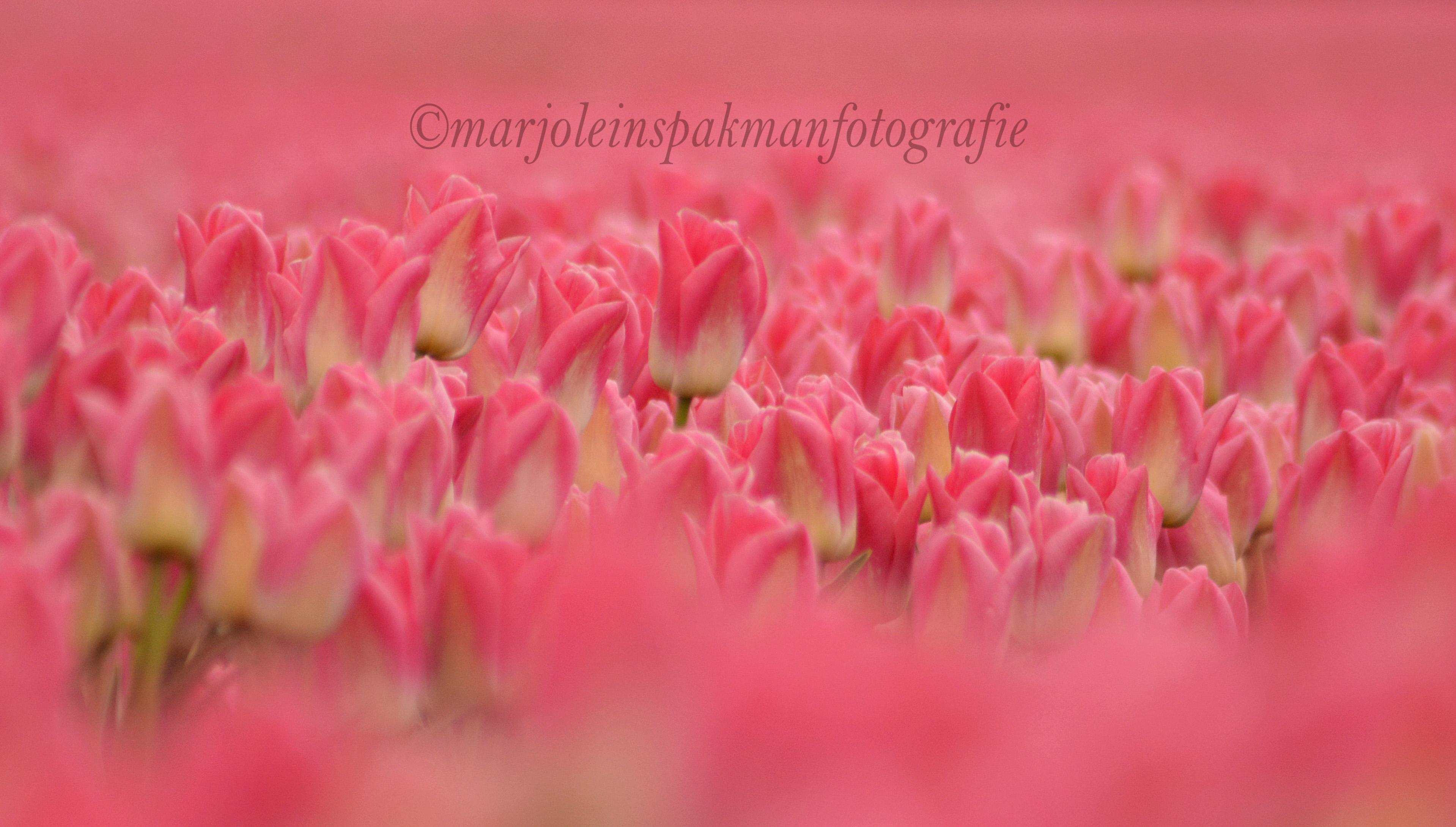 bloemen14