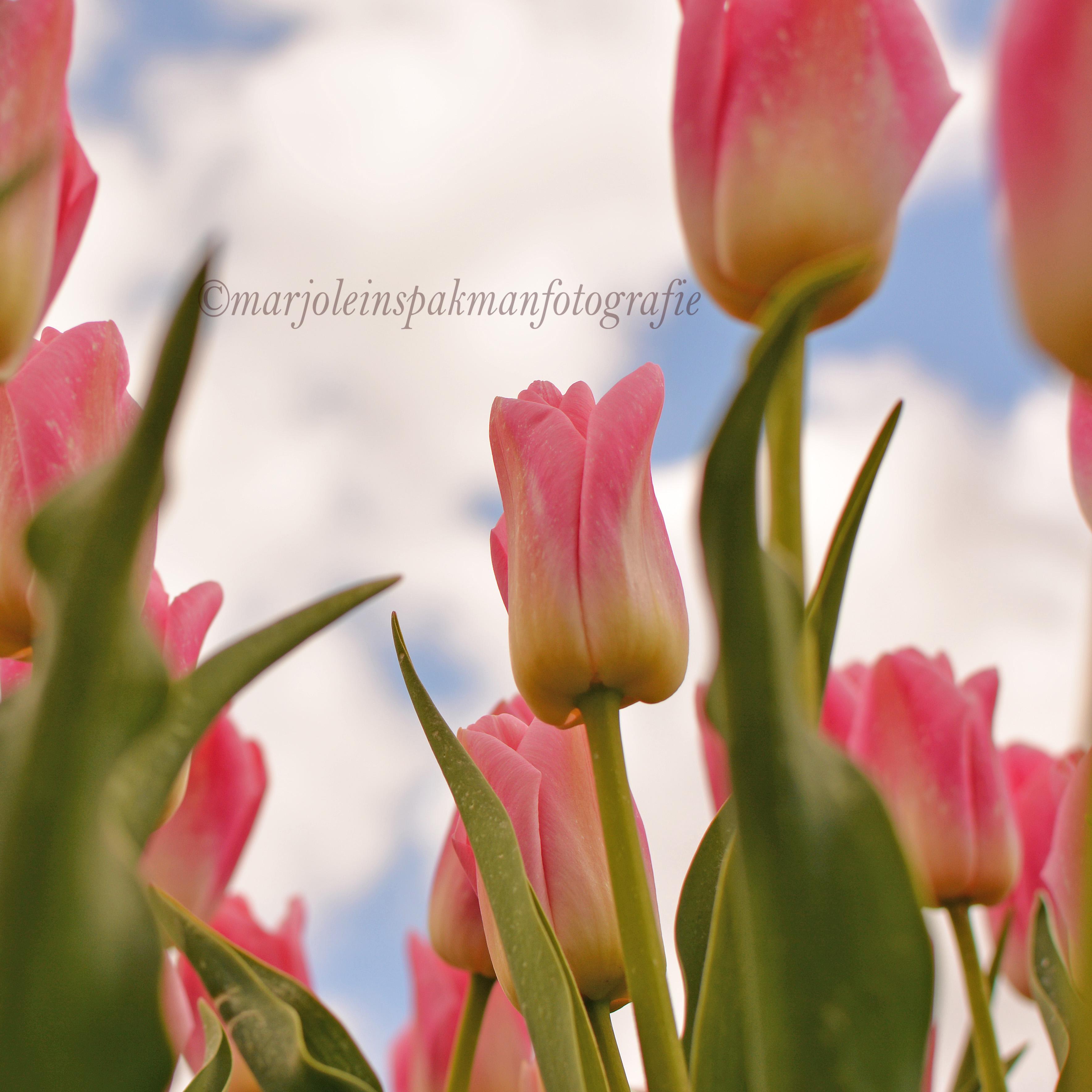 bloemen13