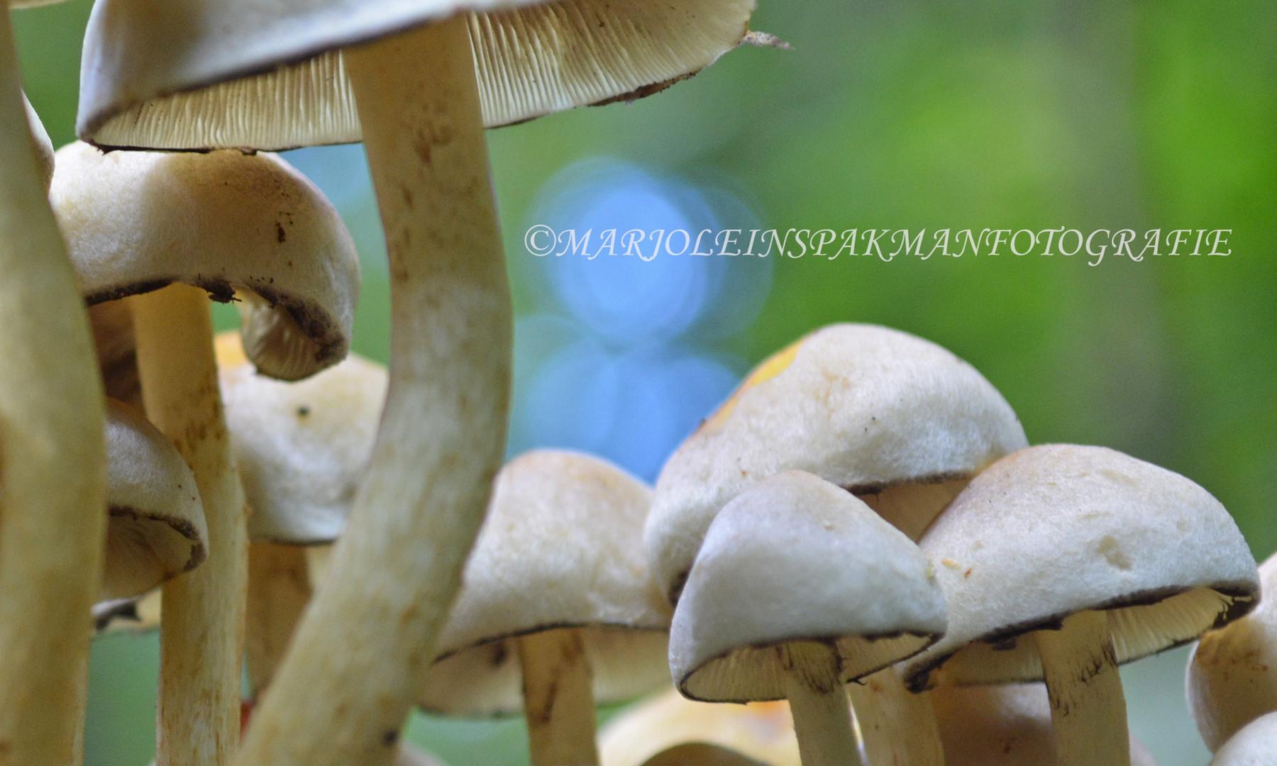 paddenstoelen04