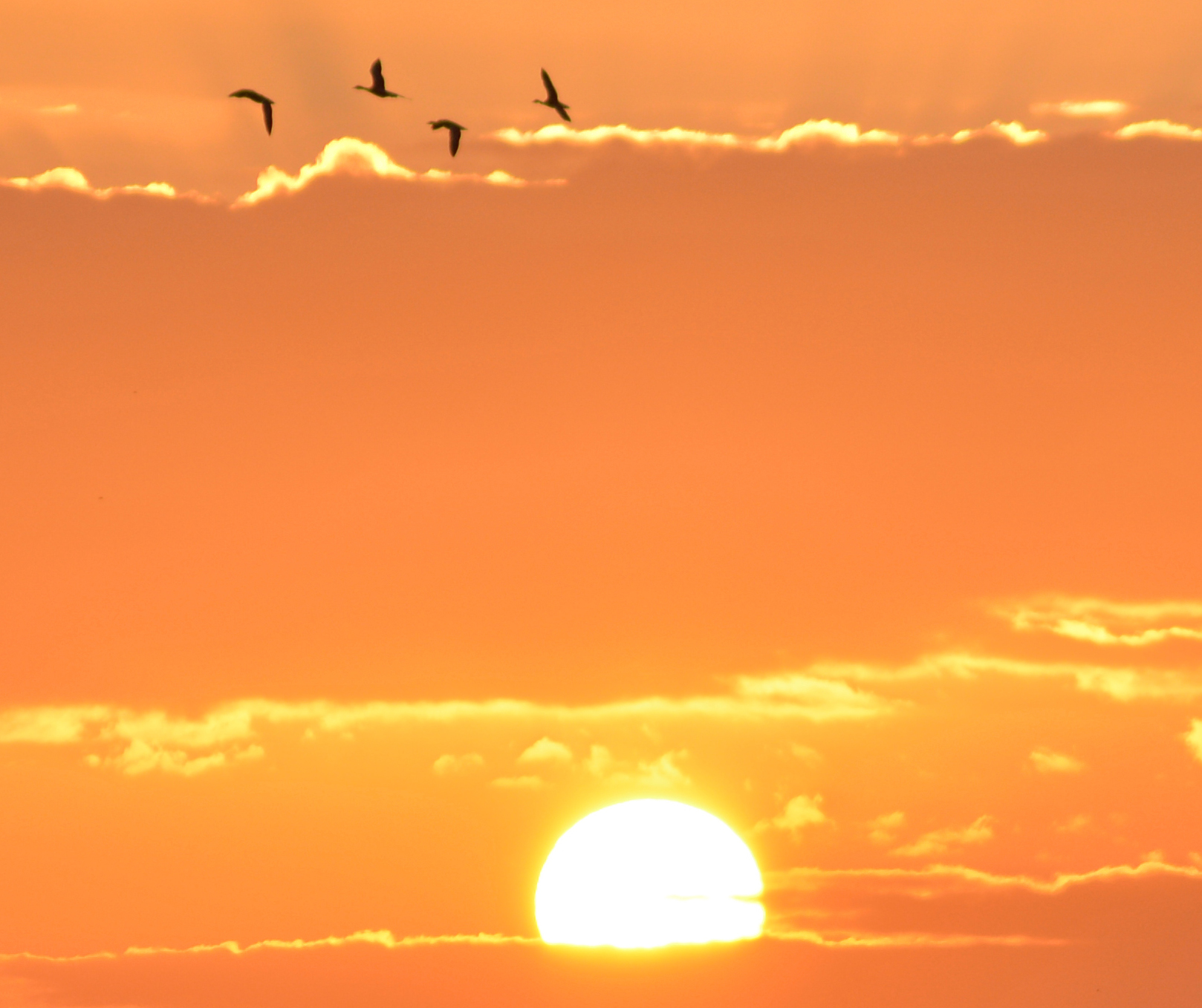vogels bij zonsopgang
