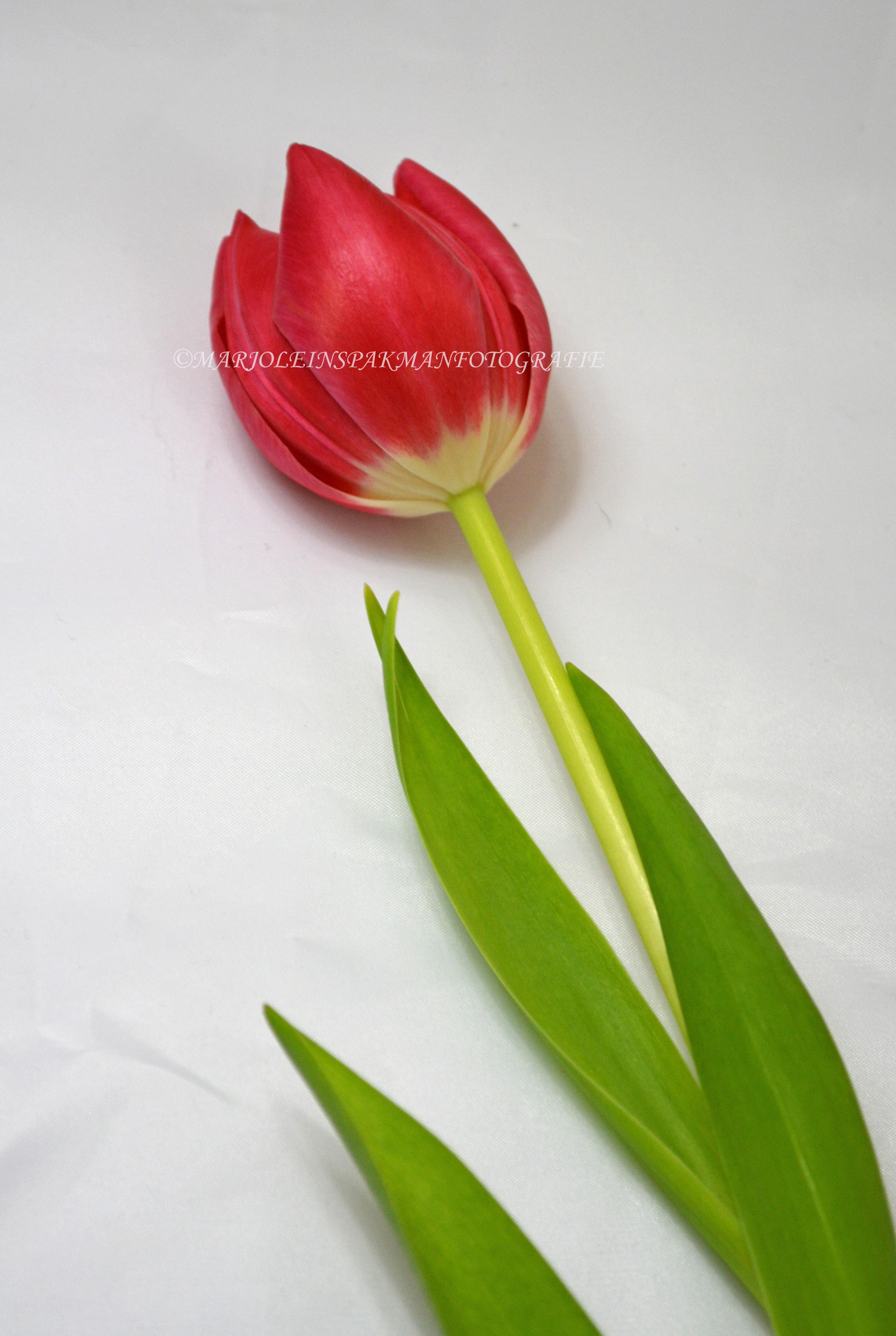 bloemen05