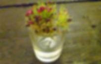 bouquet[1].jpg