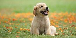 Zen Dog Center - Private Event