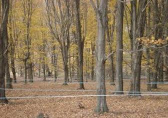 Trees and tubing.jpg