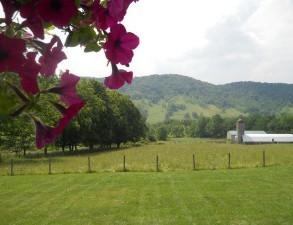 Healing Farm