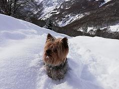 Chronos dans la neige.jpg