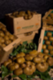Agricola Ceglia | AngelKiwi. I kiwi biodinamici