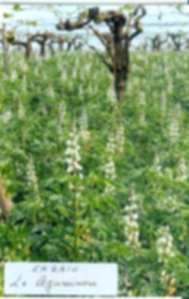 Agricola Ceglia | Biodinamici da più di 30 anni
