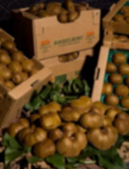 I Kiwi biodinamici dell'Azienda Agricola Ceglia