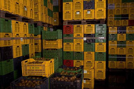 Agricola Ceglia | Le nostre celle frigo