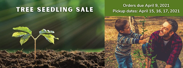 Tree seedling sale 2021.png