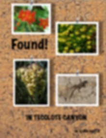 History, Flora and Fauna Overview of Tecolote Canyon by M. Eloise Battle