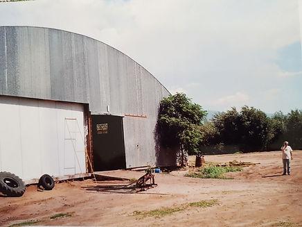 olivar en capayan 2.jpg