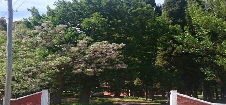 Ingreso con hermosa arboleda de pinos, robles y eucaliptos