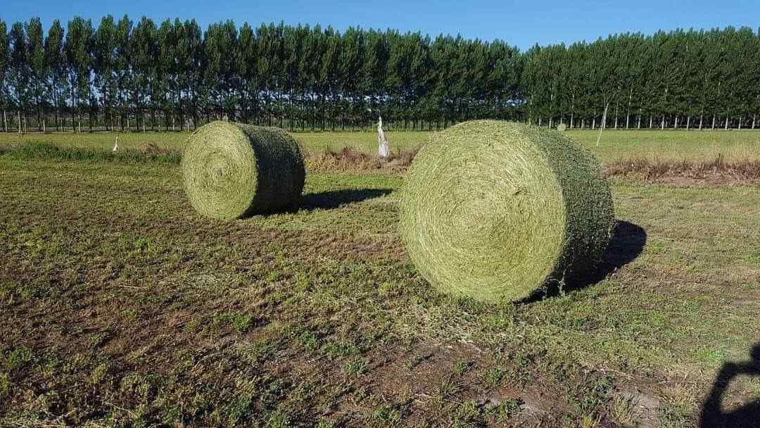 Rollos de Alfalfa