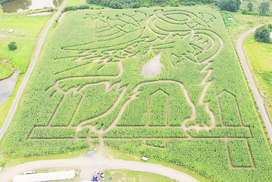 The corn maze at Samascott's Garden Market is open annually every September and October