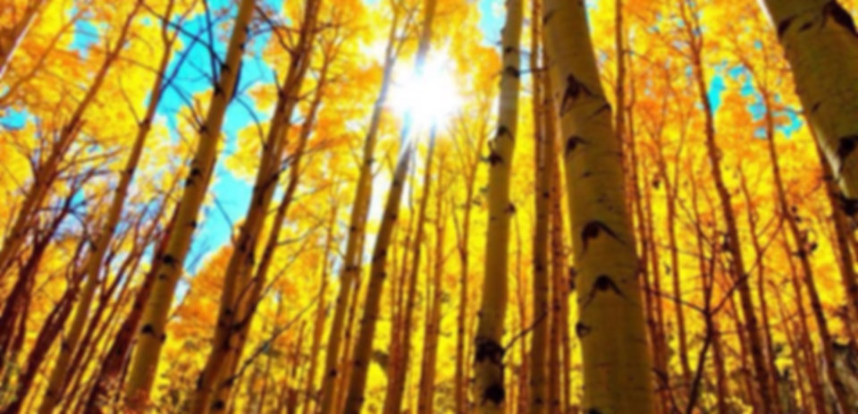aspen tree pic_edited.jpg
