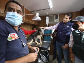 Cuidado animal, acción continúa en administración municipal de Alfonso Martínez