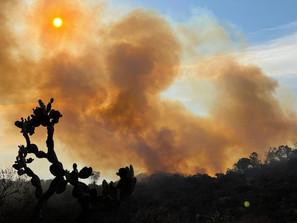 Controlado, el incendio en el Cerro el Punhuato
