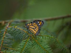 Cierra sus puertas el Parador Turístico de Senguio en la zona de la mariposa Monarca