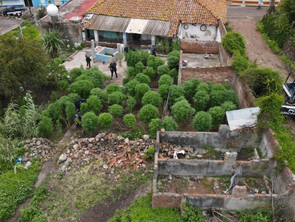 Localiza y destruye SSP más de 120 plantas de marihuana, en Penjamillo