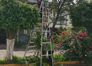 Gobierno de Morelia prevalece en atención de áreas verdes de la ciudad