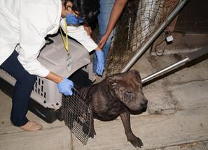 En cateo, rescata FGE a cuatro caninos domésticos que estaban en abandono en un domicilio