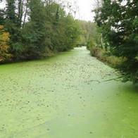 L'eau du bassin à poissons de La Sagesse est-elle conforme ?