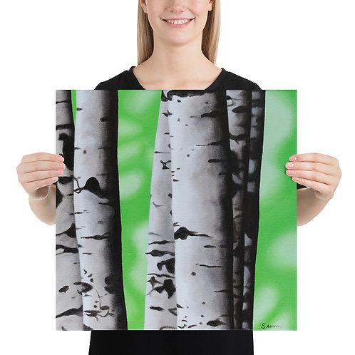 Birch Tree 2