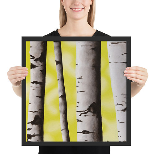 Birch Tree 3 - Framed
