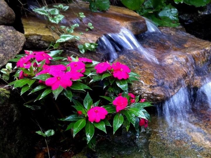 Cascades et jardin d'eau