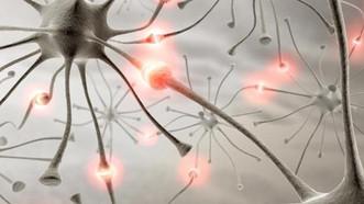 Что важно знать HR-профессионалу про нейрофизиологию?