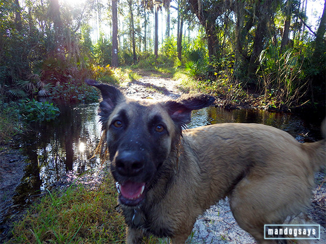 dog coco swamp