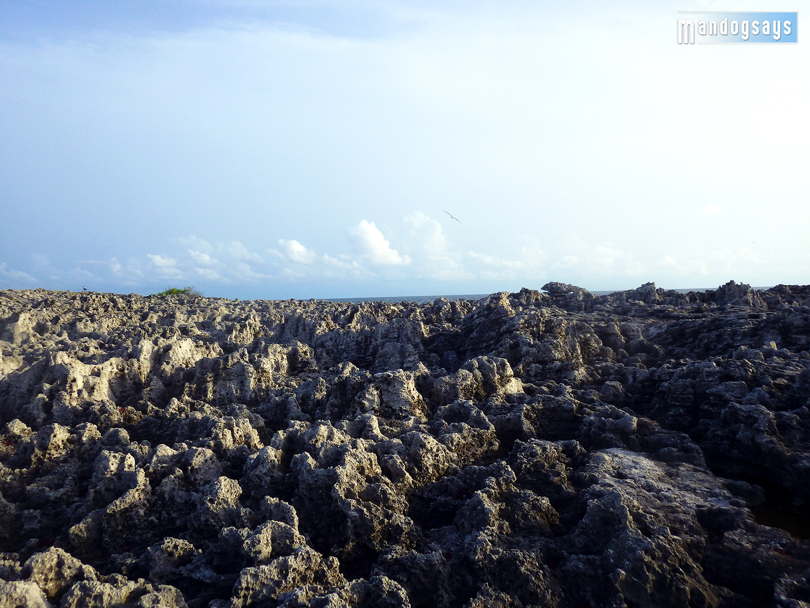 Once thriving corals existed on these limestone structures